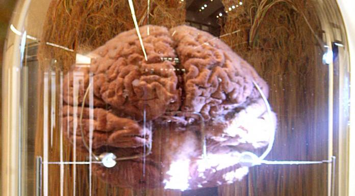 10 datos fascinantes sobre la memoria 2
