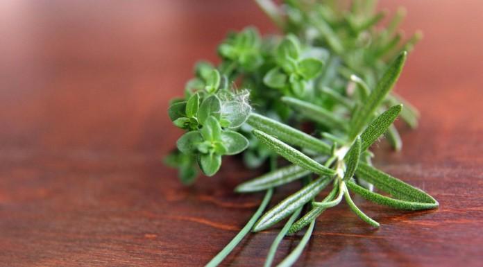 4 hierbas medicinales para mejorar la salud pulmonar y fortalecer los pulmones