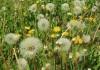 Consejos y remedios para las alergias estacionales