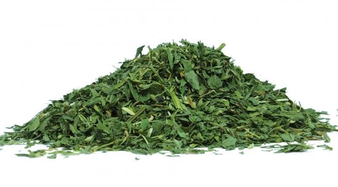 ¿Conoces los beneficios de la alfalfa para la salud?