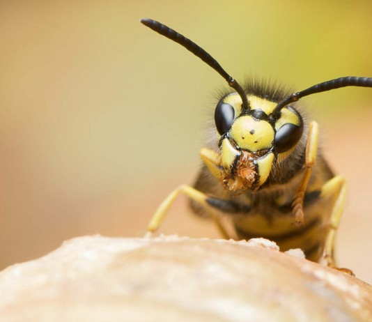 5 remedios caseros para las picaduras de abejas y avispas