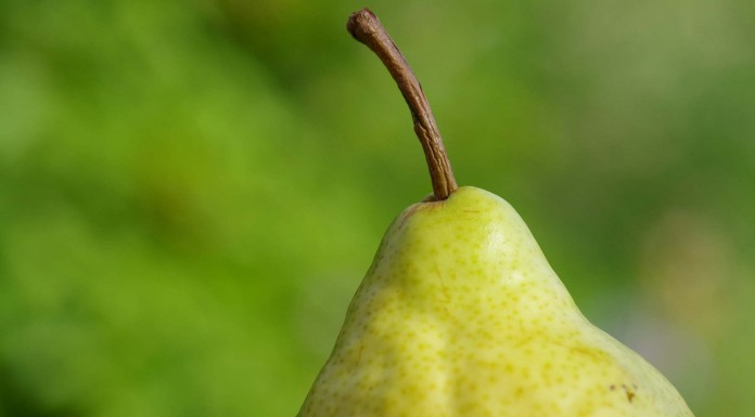 11 razones para comer una pera todos los días (II)