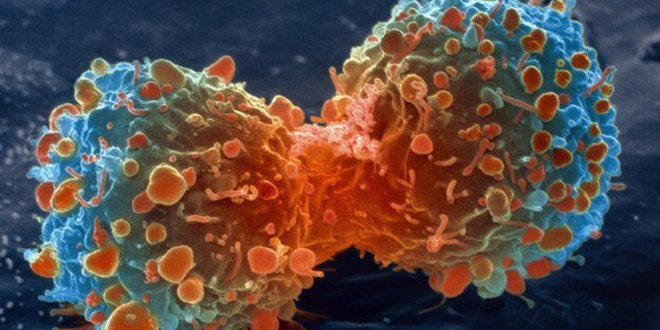 Una molécular podría inhibir el desarrollo de 9 de cada 10 tipos de cáncer