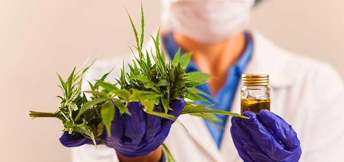 Beneficios de la marihuana 1