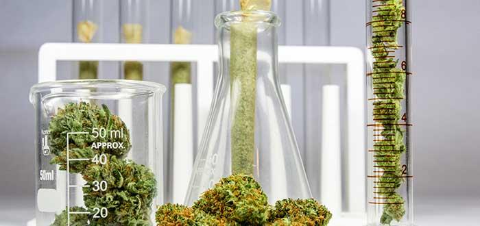 Legalización cannabis 2