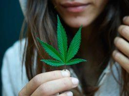 Legalización cannabis