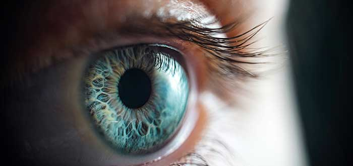 Cómo es el ojo humano. Los secretos que debes conocer. 2
