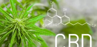 El CBD presente en el aceite de cannabis garantiza calidad de vida