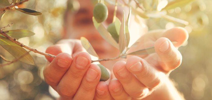 Beneficios de la aceituna- 10 Beneficios de la aceituna