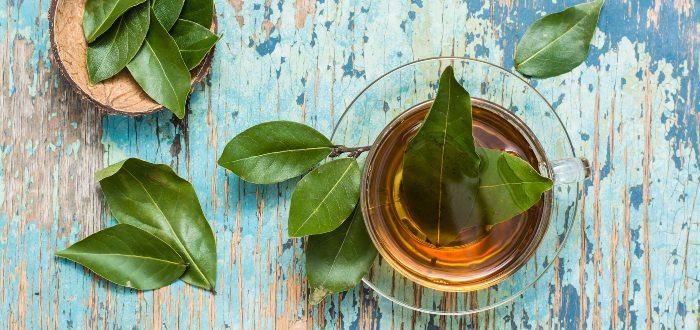 Beneficios del laurel- Contraindicaciones del laurel